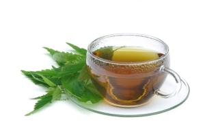 Tee Brennessel - tea nettle 02